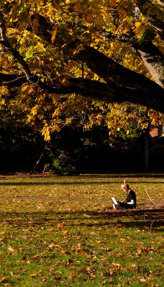 Photo of a student sitting under a tree in the fall